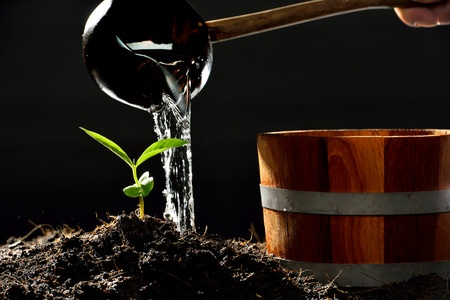 planting the seed of social success
